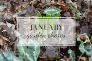 January Garden Task Checklist