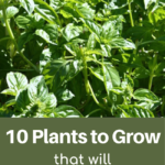 10 plants to grow to save money