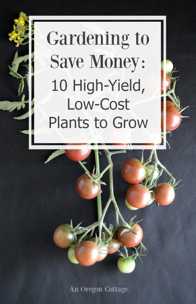 Gardening to Save Money 10 High-Yield, Low-Cost Plants to Grow