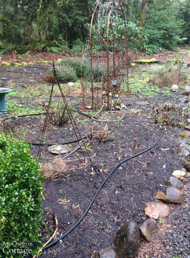 Late Winter Garden After