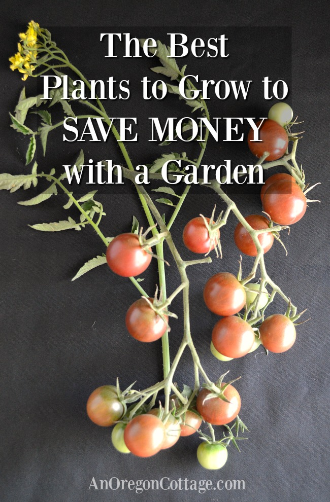 best plants to grow to save money