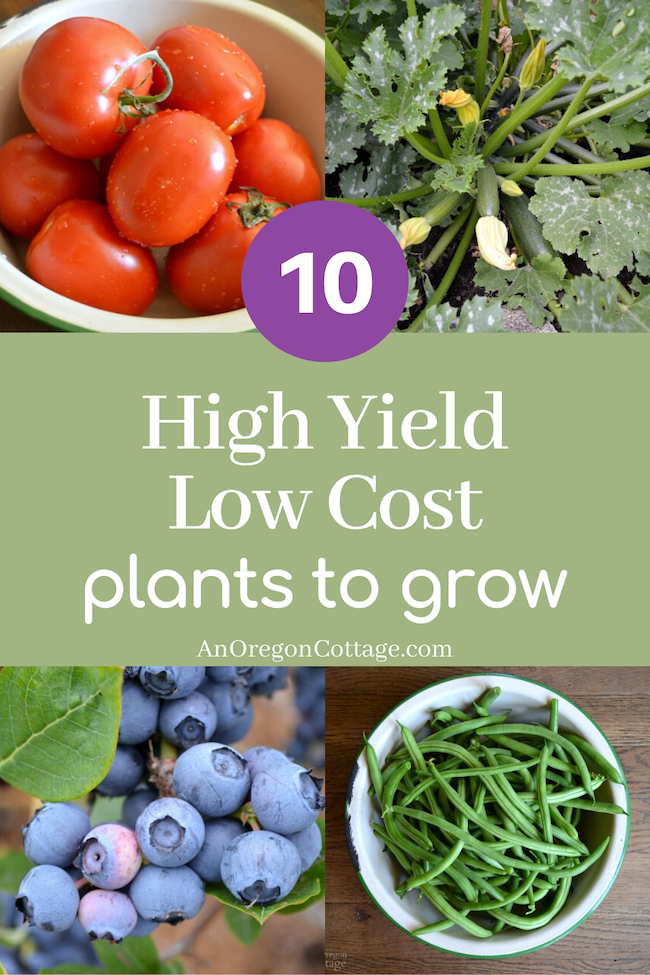 high yield low cost plants to grow_