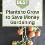 plants to grow to save money gardening