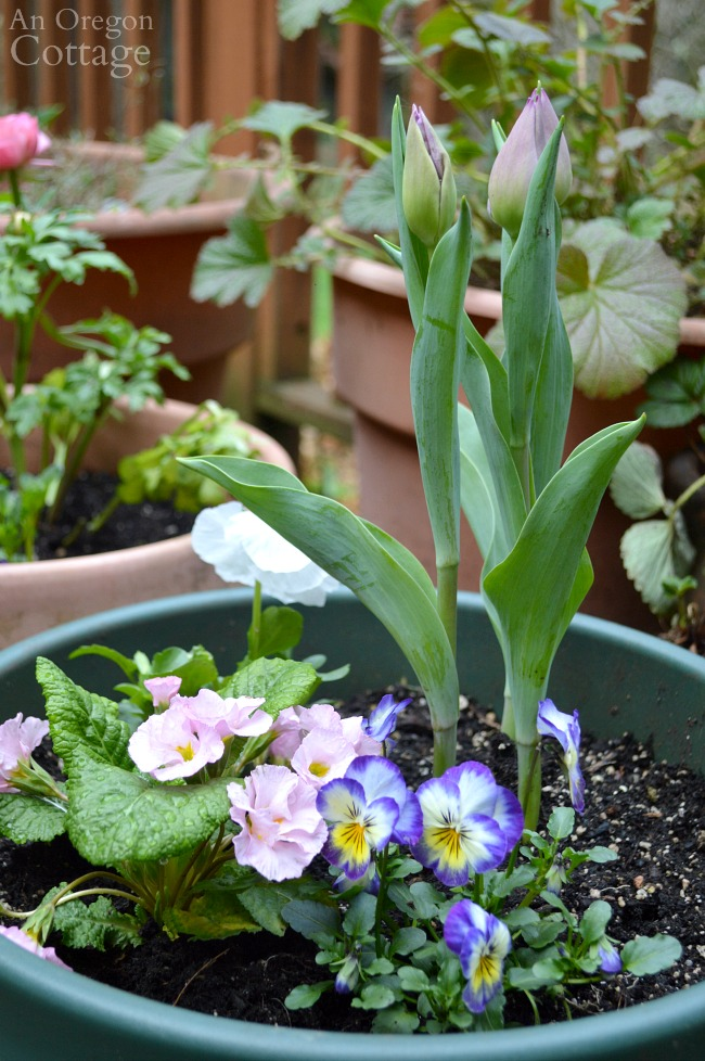Flower pots for spring-tulip planter