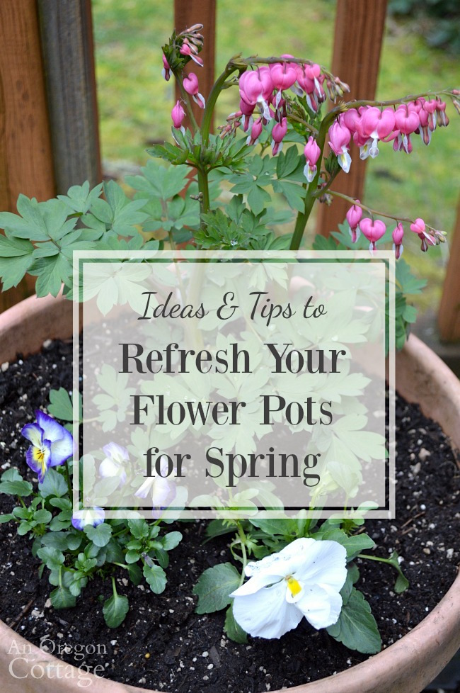 Ideas tips to refresh your flower pots for spring an oregon cottage ideas and tips to refresh your flower pots for spring using readily available spring flowers like mightylinksfo