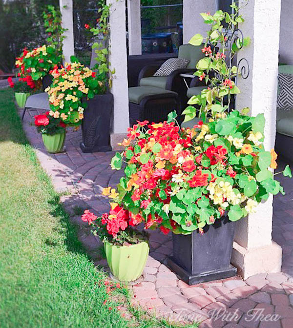 Nasturtiums-In-Outdoor-Planters via Time with Thea