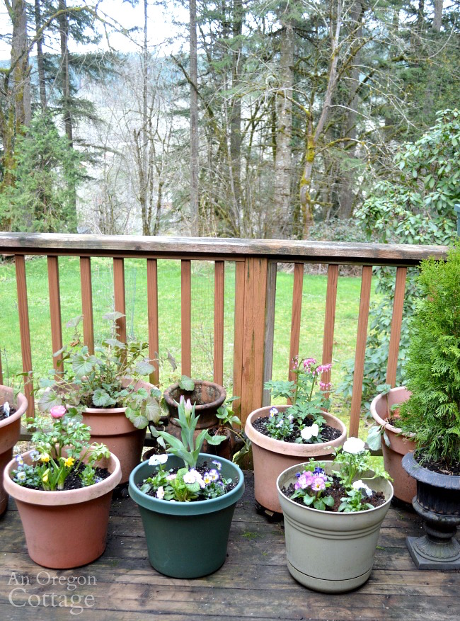 Planted flower pots for spring on deck