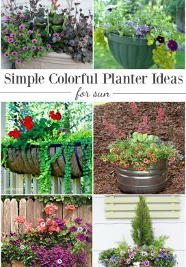 Simple Colorful Planter Ideas For Sun