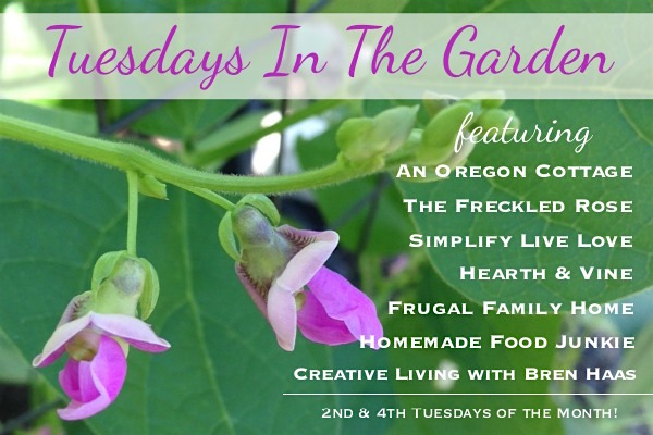 Tuesdays-In-The-Garden-2017