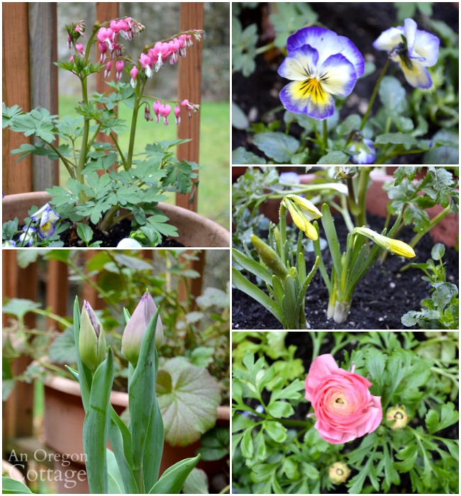 Flower pots for spring with garden center staple plants