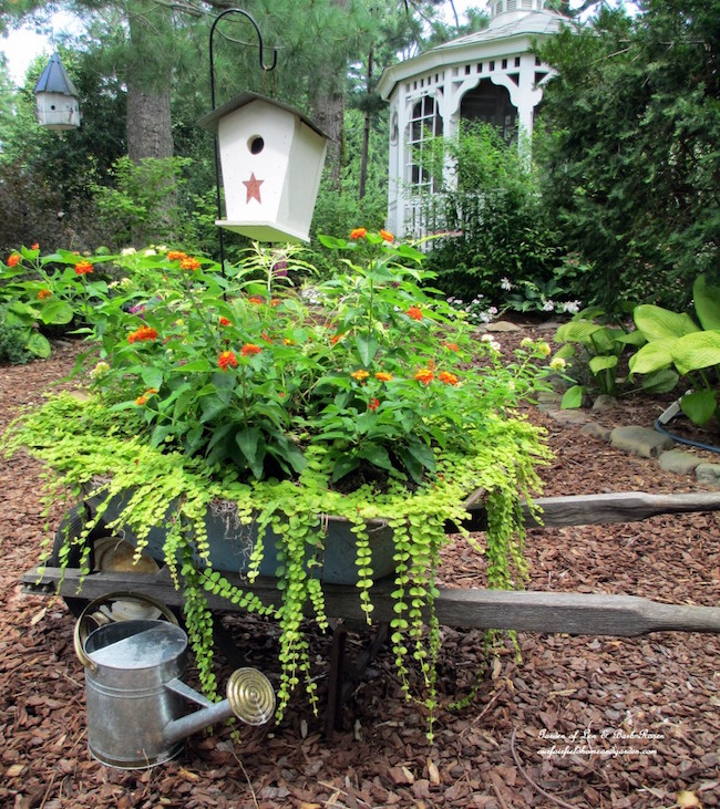 wheelbarrow with lantana and creeping jenny via our fairfield home and garden