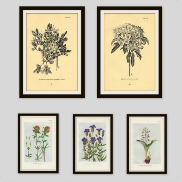 vintage botanical prints from etsy