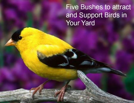 5 Bushes to Attract Birds at Homemade Food Junkie
