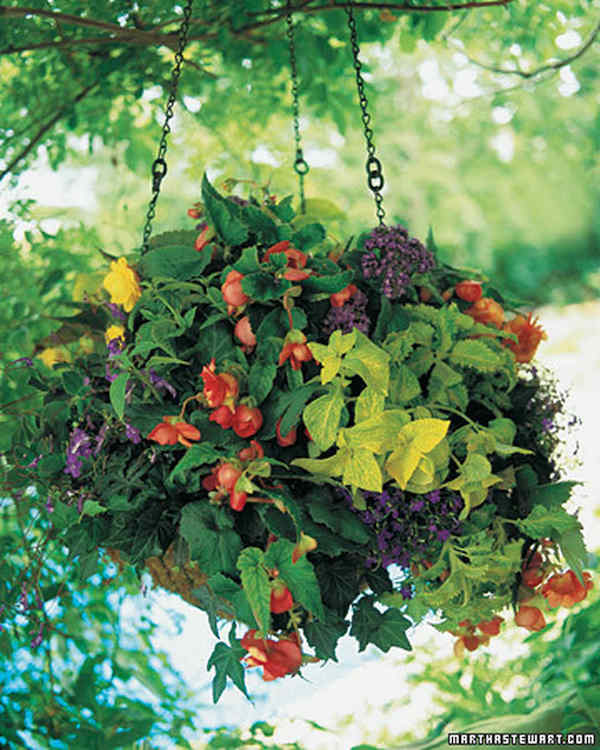 Container Gardening Ideas for Shade-Begonia heliotrope coleus ivy and lobelia hanging basket at Martha Stewart