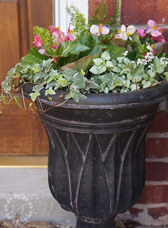 Container Gardening Ideas for shade-Begonia English ivy Lamium alyssum asparagus fern porch container at Lost and Found Decor