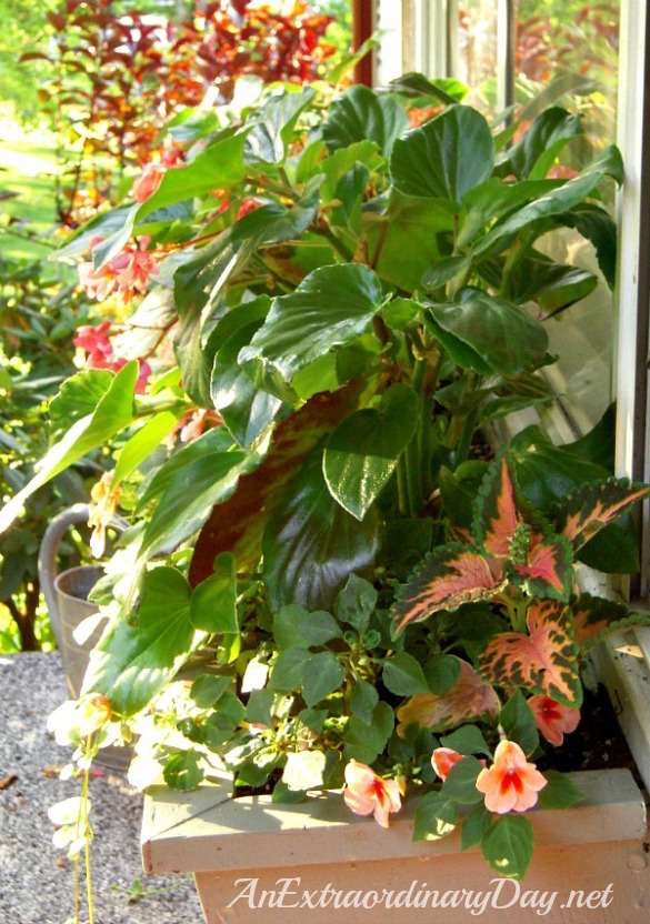 Container Gardening for shade-window box garden-AnExtraordinaryDay