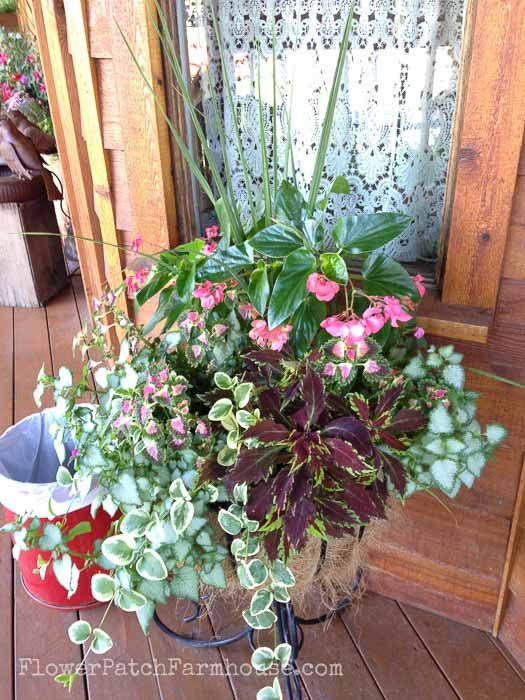 Container Gardening ideas for shade-Begonia coleus lamium creeping charlie at Flower Patch Farmhouse