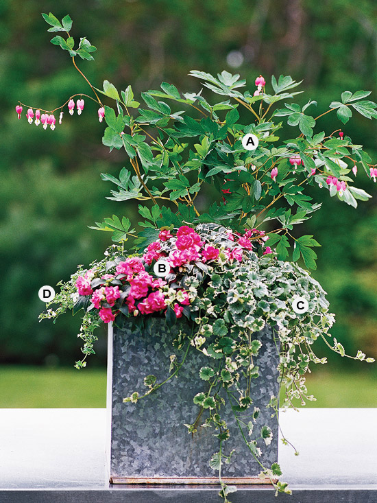Container Gardening ideas for shade-Bleeding heart, variegated ground ivy and impatiens at BHG