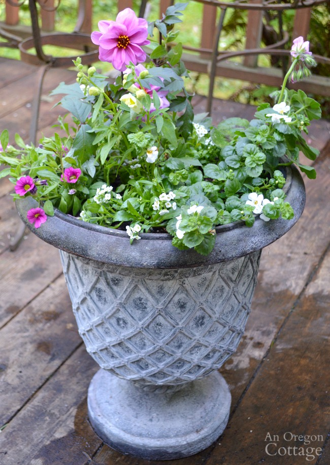 Flower Pot planted with Sun loving plants
