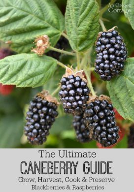 The Ultimate Caneberry Guide: Grow, Harvest, Cook & Preserve Raspberries and Blackberries