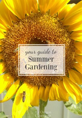 Guide to Summer Gardening-tips to keep your yard and garden looking good through the heat.