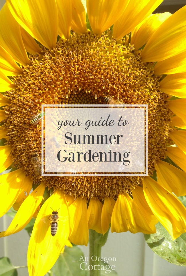 Guide to Summer Gardening image of sunflower with bees.