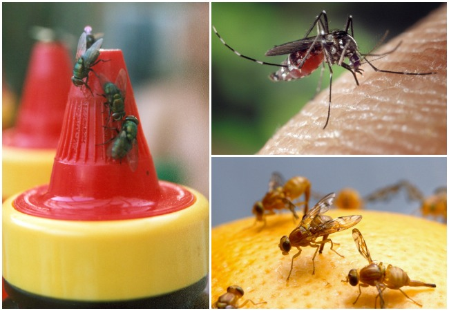 Keep flying insects away-flies-mosquitoes-fruit-flies