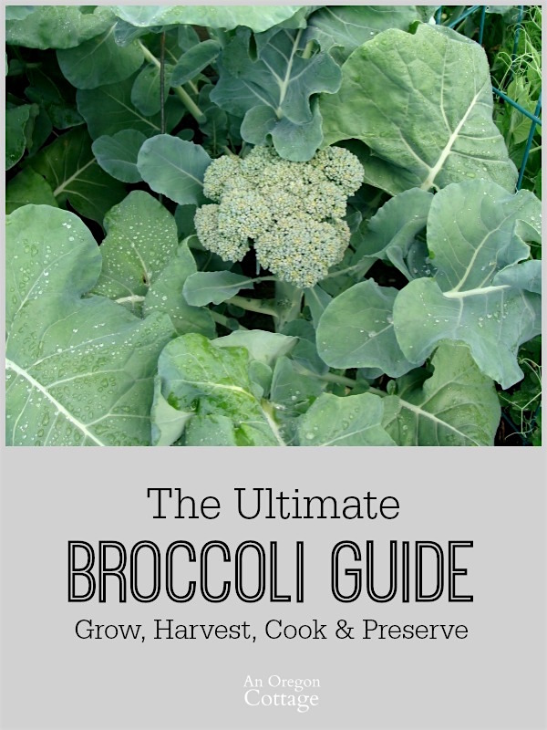 The Ultimate Broccoli Guide-Grow, Harvest, Cook & Preserve-growing tips and recipes for eating and putting up.