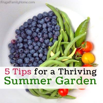 Tips for a Thriving Summer Garden at Frugal Family Home