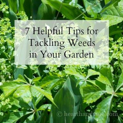 Tips to help tackle garden weeds at Hearth and Vine
