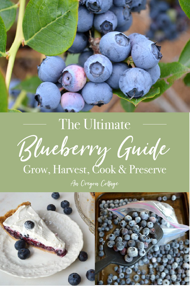 Ultimate Blueberry Guide pin image