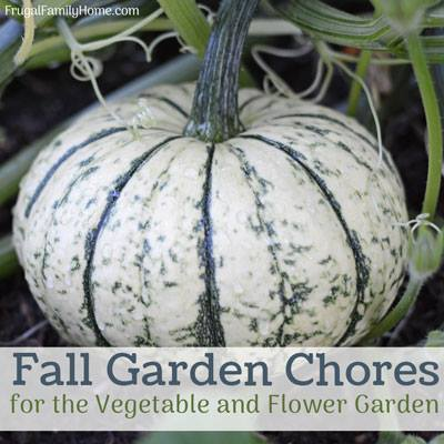 Fall Garden Chores at Frugal Family Home