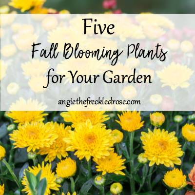 Fall blooming plants for your garden at The Freckled Rose