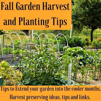 Fall garden harvest and planting tips at Homemade Food Junkie