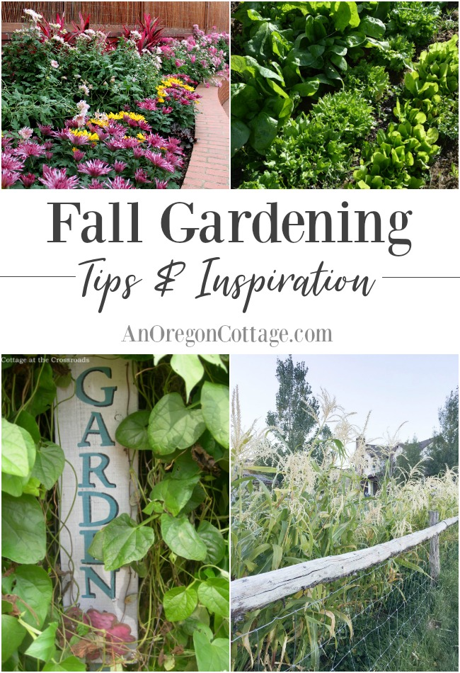 fall gardening tips and inspirational tours to help you make the most of the autumn months - Fall Garden Plant