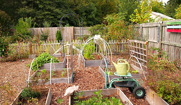 Fall gardening-fall vegetable garden at A Cultivated Nest