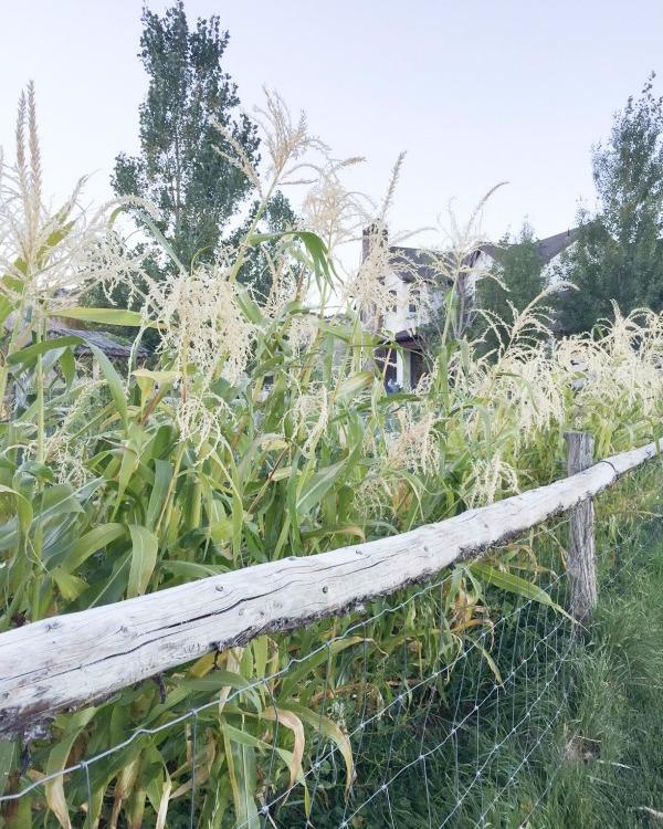 Fall Gardening-farmhouse-fall-garden-tour-TwelveOnMain