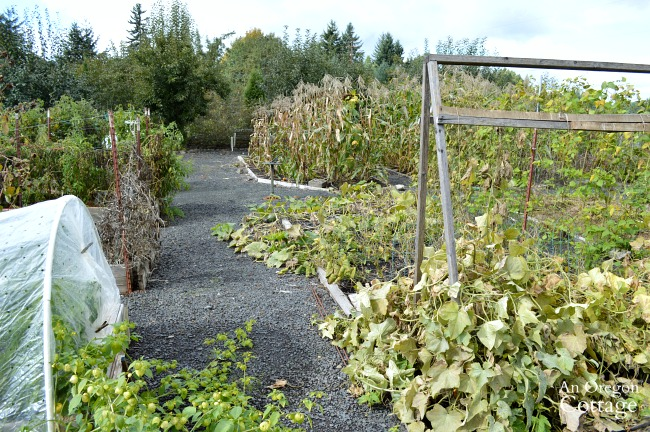 Fall-winter garden tasks-clean up vegetable garden
