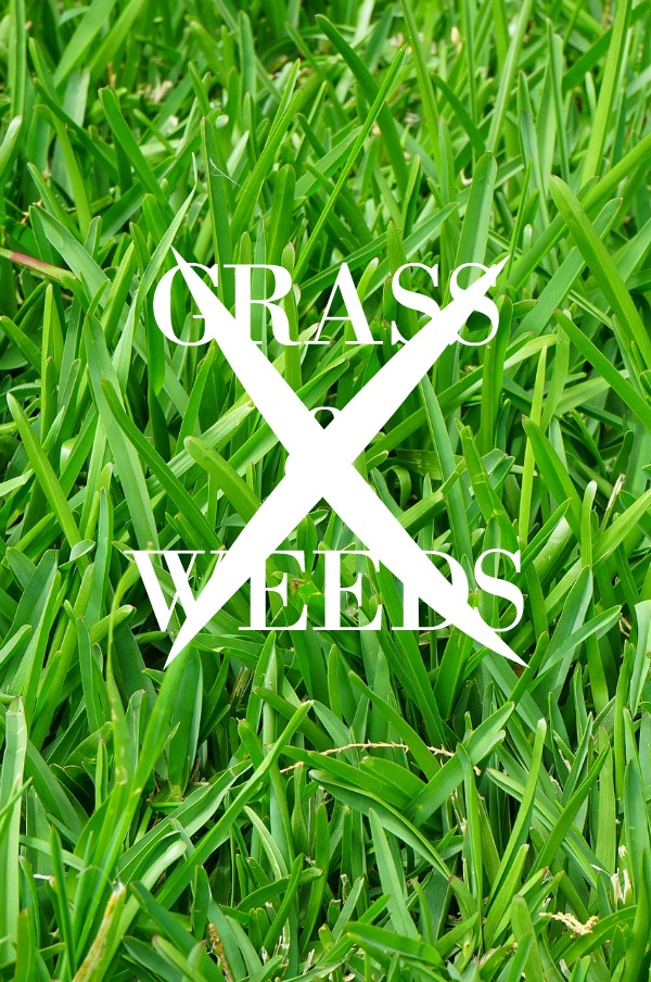 Grass and weed killing