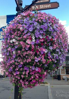 Leavenworth WA flowers-hanging petunias