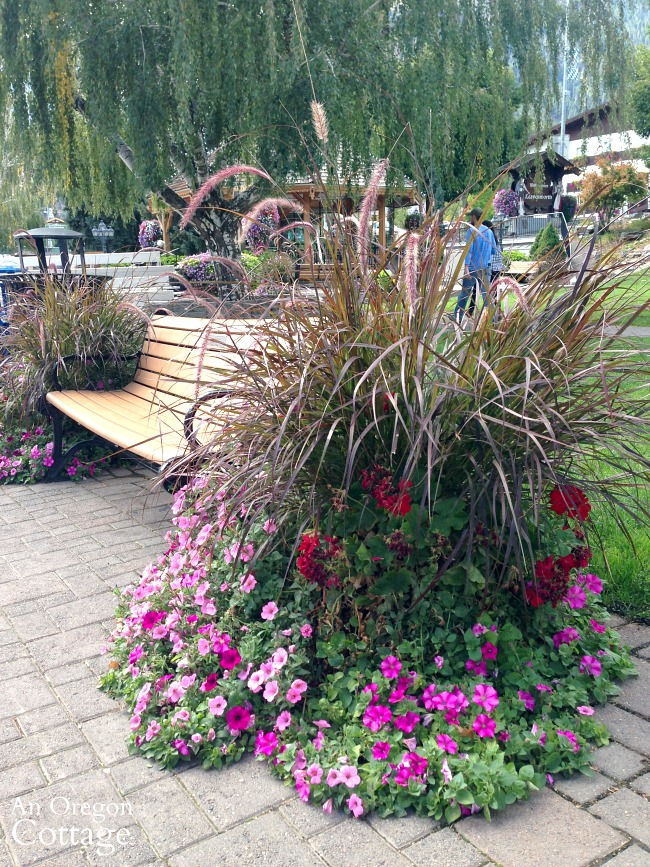 Leavenworth WA flowers-purple fountain grass petunias and geraniums