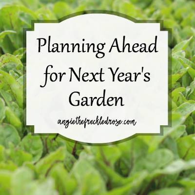 Planning Ahead for Next Year's Garden at The Freckeled Rose