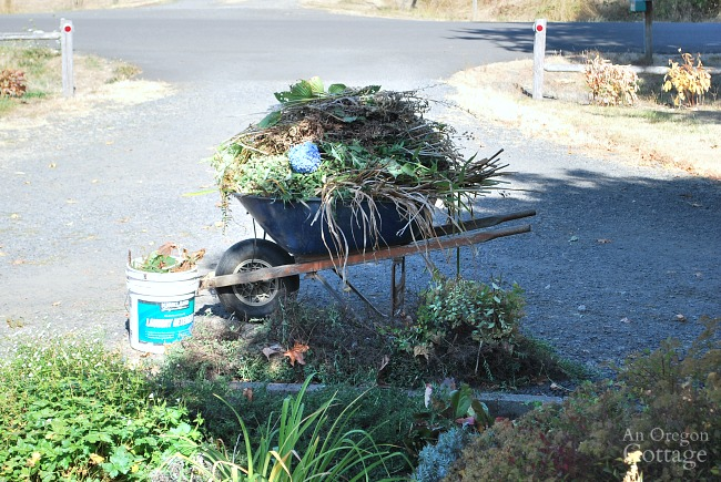 Fall-winter garden tasks-deadheading and cleanup