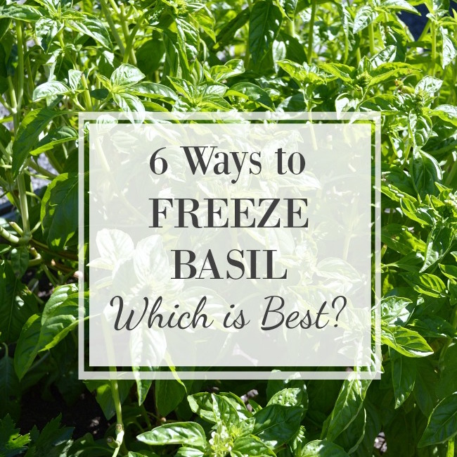 Freezing Basil 6 Ways