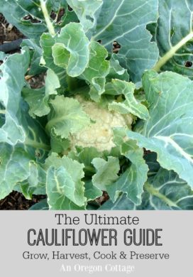 Ultimate Cauliflower Guide: Grow, Harvest, Cook & Preserve