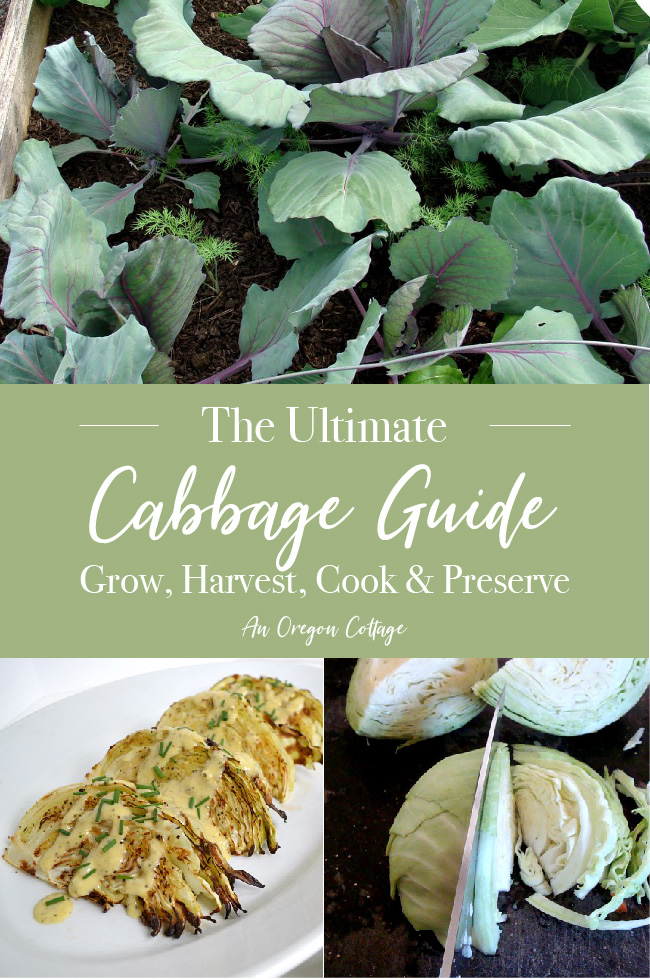 Ultimate Cabbage Guide pin image
