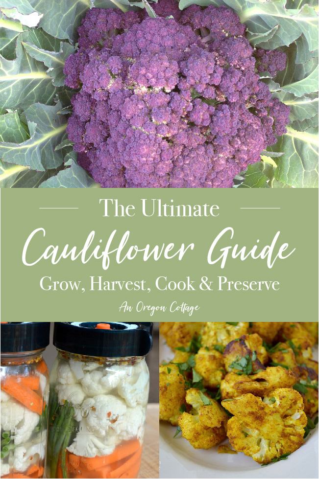 Ultimate Cauliflower Guide pin image
