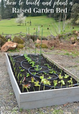 Raised bed garden planted with spring vegetables