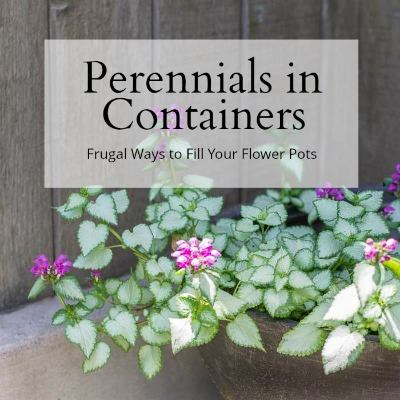 Perennials in containers