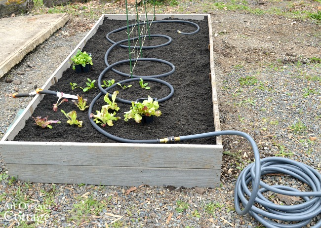 watering system in raised garden bed